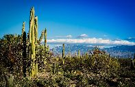 Los cactus del Saguaro National Monument