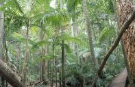 Bosque pluvial tropical