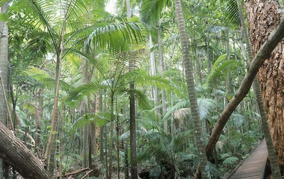Bosque pluvial tropical, Australia