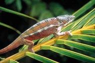 Especies endémicas en peligro,