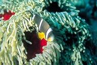 La fauna submarina,