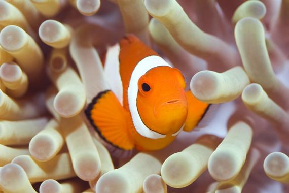 La fauna submarina